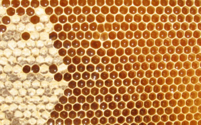 History of Beeswax